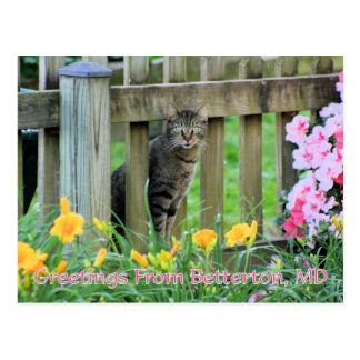 Greetings From Betterton, MD Cat Photography Postcard