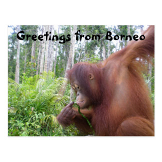 Greetings from Borneo Postcard