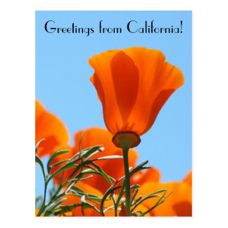 Greetings from California! Postcard