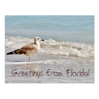 Greetings from Florida Miami seagull Postcard