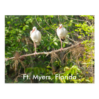 Greetings from Florida! Postcards