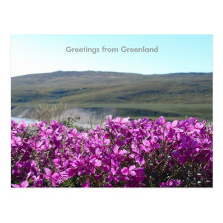 Greetings from Greenland 10 Postcard