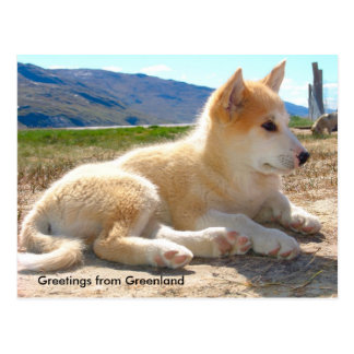 Greetings from Greenland 12 Postcard