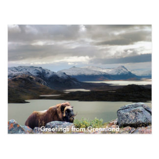 Greetings from Greenland 13 Postcard