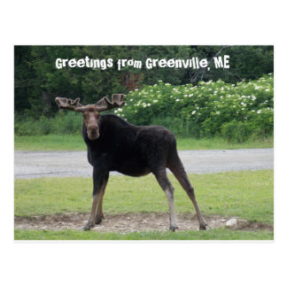 Greetings from Greenville 1 Postcard