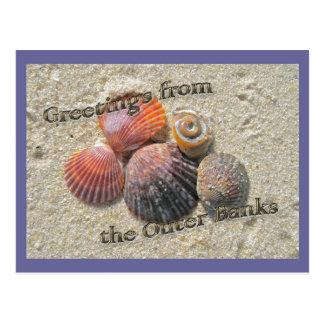 Greetings from the Outer Banks Seashells Postcard