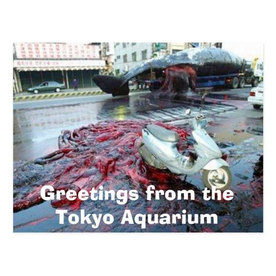 Greetings from the Tokyo Aquarium Postcard