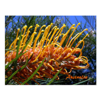 Grevillea 3, Australia Postcard
