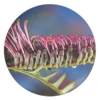 Grevillea Flower Australian Native Melamine Plate