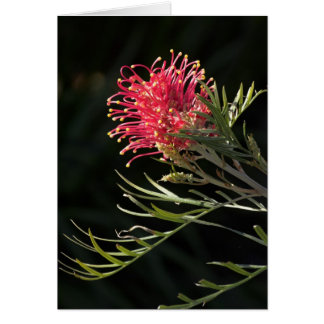 "Grevillea ""Silvia"" Greeting Card"