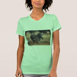 Grevy's Zebra Shirt