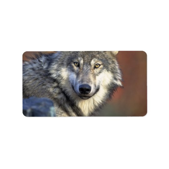 Grey and White Wolf Address Label