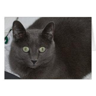 Grey Cat Card