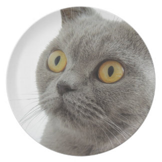 Grey Cat Golden Eyes Close-up Plate