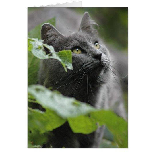 Grey Cat in the Garden Card