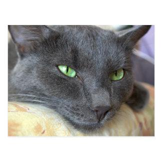 Grey cat postcard