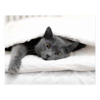 Grey Cat Under White Blanket Postcard