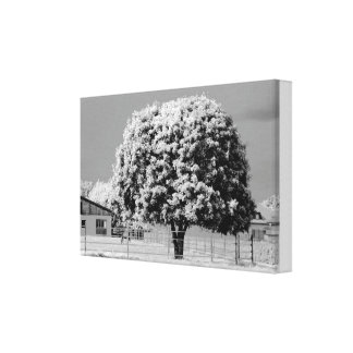 Grey country canvas print