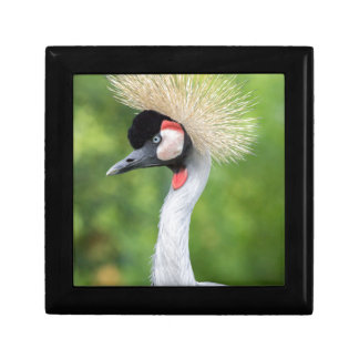 Grey crowned crane head and neck small square gift box
