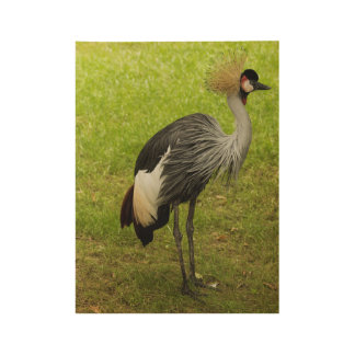 Grey Crowned Crane Wood Poster