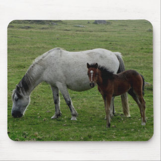 Grey Dartmoor Pony Mare And Foal Mouse Pad