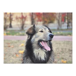 Grey dog custom announcement