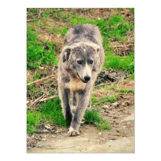 Grey dog invitations