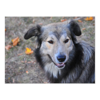 Grey dog invitation