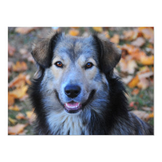 Grey dog custom invites