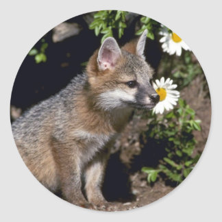 Grey Fox-young kit Classic Round Sticker