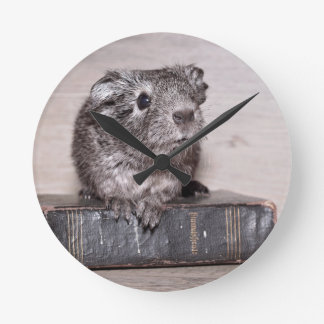 Grey Guinea Pig on Book Wall Clocks