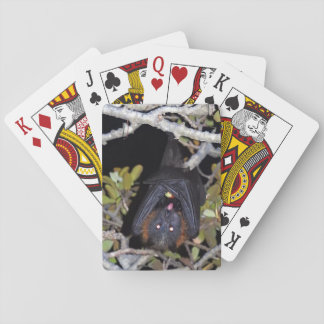 Grey-Headed Flying Fox Playing Cards