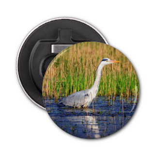 Grey heron, ardea cinerea, in a pond