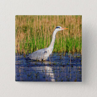 Grey heron, ardea cinerea, in a pond 15 cm square badge