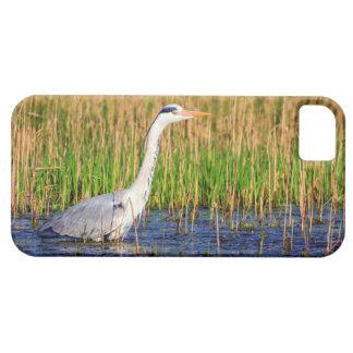 Grey heron, ardea cinerea, in a pond iPhone 5 case
