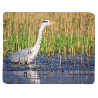 Grey heron, ardea cinerea, in a pond journal