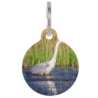 Grey heron, ardea cinerea, in a pond pet tag
