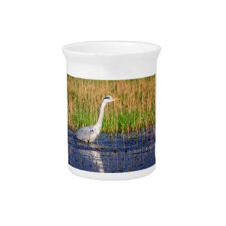 Grey heron, ardea cinerea, in a pond pitcher