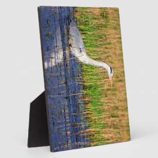 Grey heron, ardea cinerea, in a pond plaque