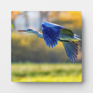 Grey heron, ardea cinerea plaque