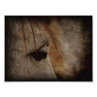 Grey Horse Face Grunge Photograph