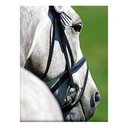 Grey Horse Post Card