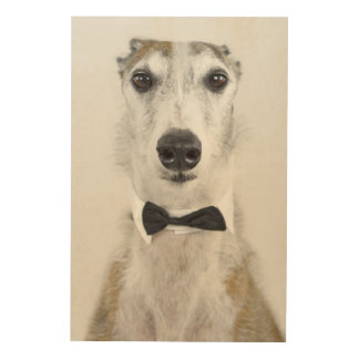 Grey Hound dressed up Wood Print