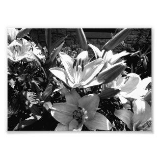 Grey Lilies Photo Print