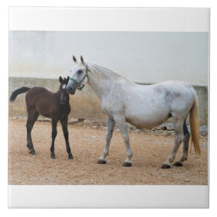Grey Lipizzan Mare and Foal Tile