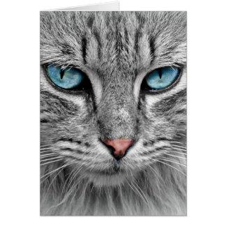 Grey Long  Hair Cat Blue Green Eyes Pet Animal Card