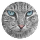 Grey mackerel tabby cat with blue eyes plate