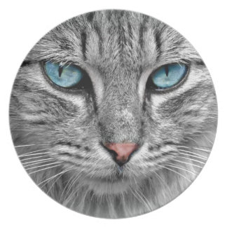 Grey mackerel tabby cat with blue eyes plate