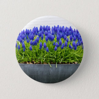 Grey metal flower box with blue grape hyacinths 6 cm round badge