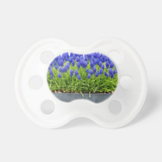 Grey metal flower box with blue grape hyacinths baby pacifier